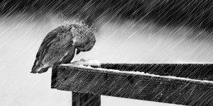 Rain-Birds-l