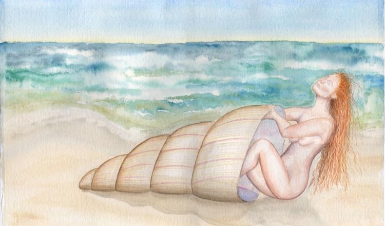 shell900.jpg